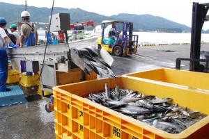 Fisheries Support in Ofunato City Iwate(C)PWJ