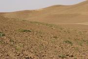 畑がある丘陵域の斜面