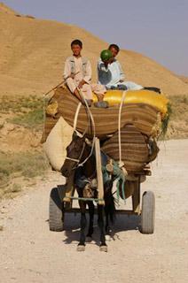 馬車でスイカを運ぶ