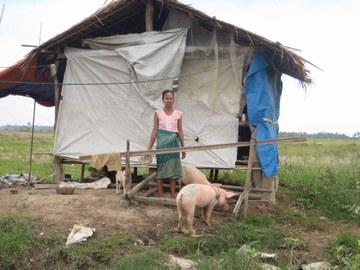 被災者とPWJ配布の豚