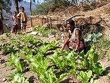 野菜栽培に取り組むサブグループの女性