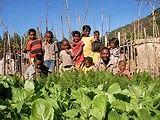 野菜の成長を子どもたちも見守る