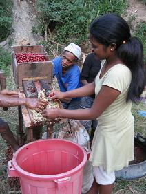 湧き水を使った家族総出の脱穀作業