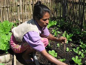 野菜づくりに励む生産者グループのメンバー