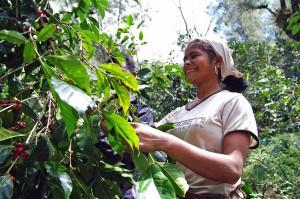 コーヒーの生産者の女性