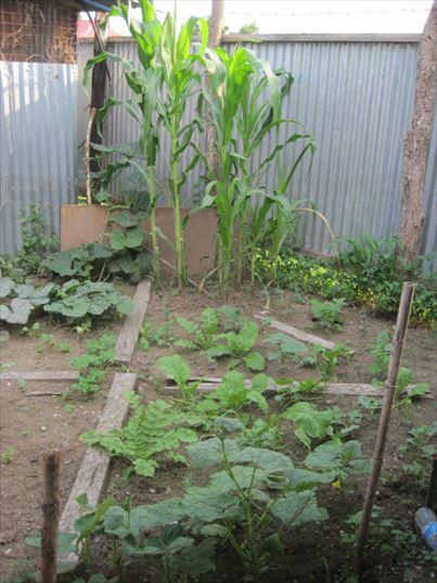 ピースウィンズ・ジャパンの南スーダン事業 ボー事務所の家庭菜園