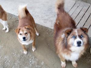 ルポ用 福島の犬