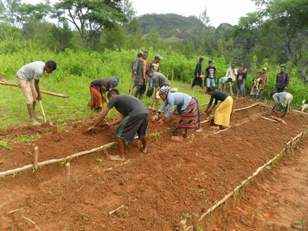 エルメラ県レテフォホ郡ドゥクライ村での苗床作りの様子