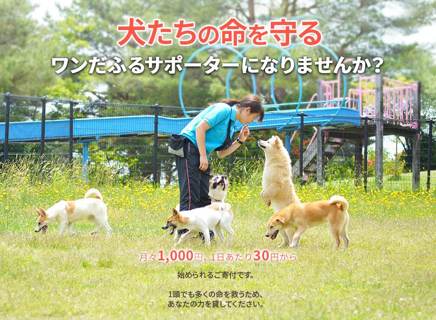 ピースワンコ・ジャパン 保護犬の里親探しはワンだふるサポーター
